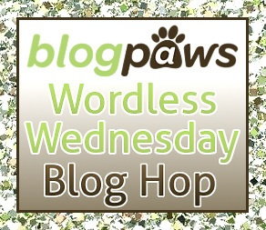 Blogpaws Wordless Wednesday logo