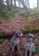 Cassie & Roxy