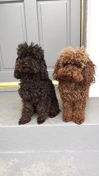 Sadie & Violet