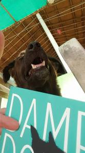 Even Sandy found something amusing in 'Damp Dogs & Rabbit Wee.'