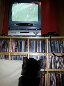 Pacco totally engrossed in the Algeria -v- Togo soccer match.
