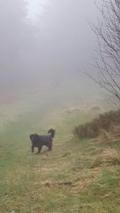OZZIE in fog - April 2016