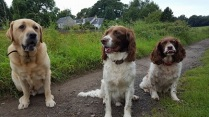 Bailey, Oscar & Rowan (doing his Mick Jagger impression.)