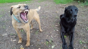"""""""OK look! I DID floss this morning."""" But Cali is unimpressed with Dougal's assertion."""