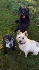 OZZIE, SAM & GEM - Summer 2015